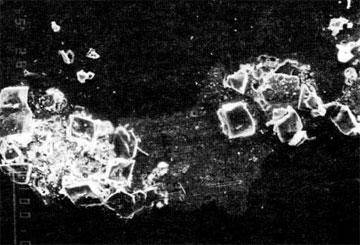 Ναός Απτέρου Νίκης. Κρύσταλλα γύψου μέσα σε αργιλοπυριτική φλέβα του μαρμάρου.