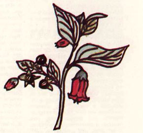 Μπελαντόνα, Άτροπος η Ευθαλεία (Atropa Belladona).
