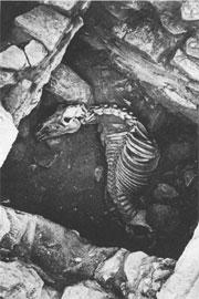 Τάφος (Ι) βασιλιά στο Βρανά με το σκελετό του αλόγου του.