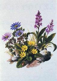 Τυπικά λουλούδια των βουνών της Εύβοιας: ανεμώνη η χαρίεσσα, όρχις ο τετράστικτος και ρανούνκουλος η φικάρια (Σχ. Γ. Σφίκας).