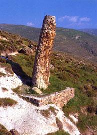 Απολιθωμένος κορμός στο απολιθωμένο δάσος της Λέσβου, το οποίο έχει χαρακτηριστεί Εθνικό Διατηρητέο Μνημείο.