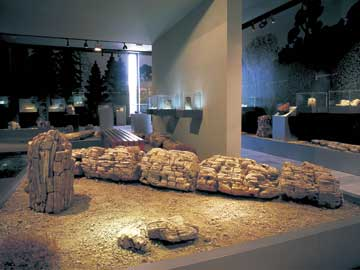 Η αίθουσα απολιθωμένου δάσους: υποθαλάσσια ευρήματα.