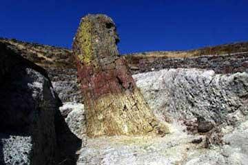 Το μεγαλύτερο απολιθωμένο δέντρο του κόσμου έχει βρεθεί στο απολιθωμένο δάσος της Λέσβου.