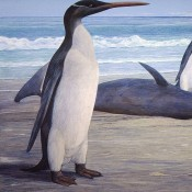 Kairuku, the giant penguin