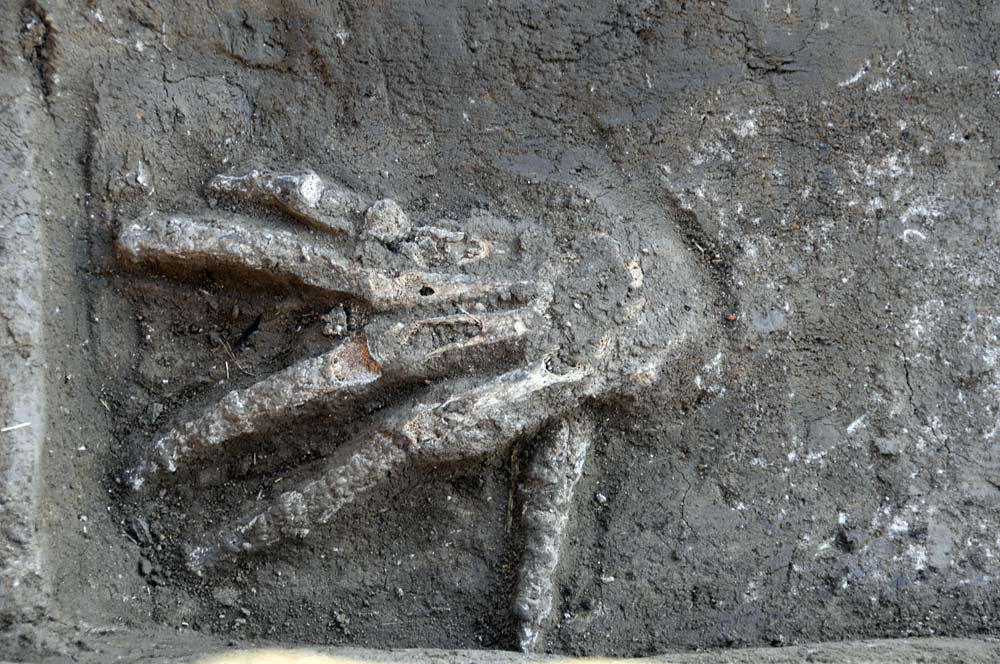 A severed right hand discovered in front of a Hyksos palace at Avaris (modern-day Tell el-Daba).