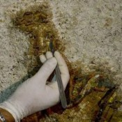 Hellenistic mosaic found in Calabria