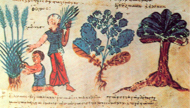Fig. 3. Ηerb collectors. 12th c. Miniature in medical code of Dioskorides (M. Lavra, M. Athos, cod. Ω, 75).