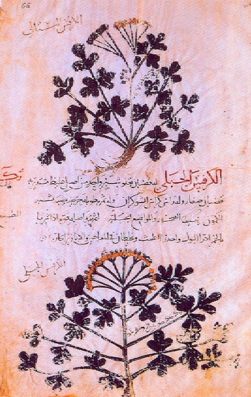 """Fig. 4. The plant """"Thistle"""" in arabic code. 9th century (Paris, Bibliotheque Nationale, Arab. MS 4947, f.66)."""