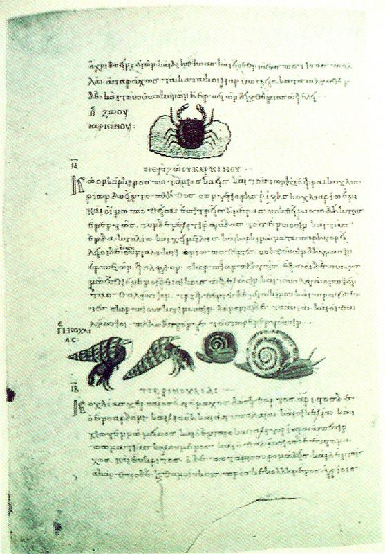 Fig. 9. Aquatics species which were raw materials for medical prescriptions. 10th c. Miniature in medical code of Dioskorides (New York Morgan Library, cod. M.652, f.207v).