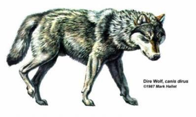 Dire wolf.