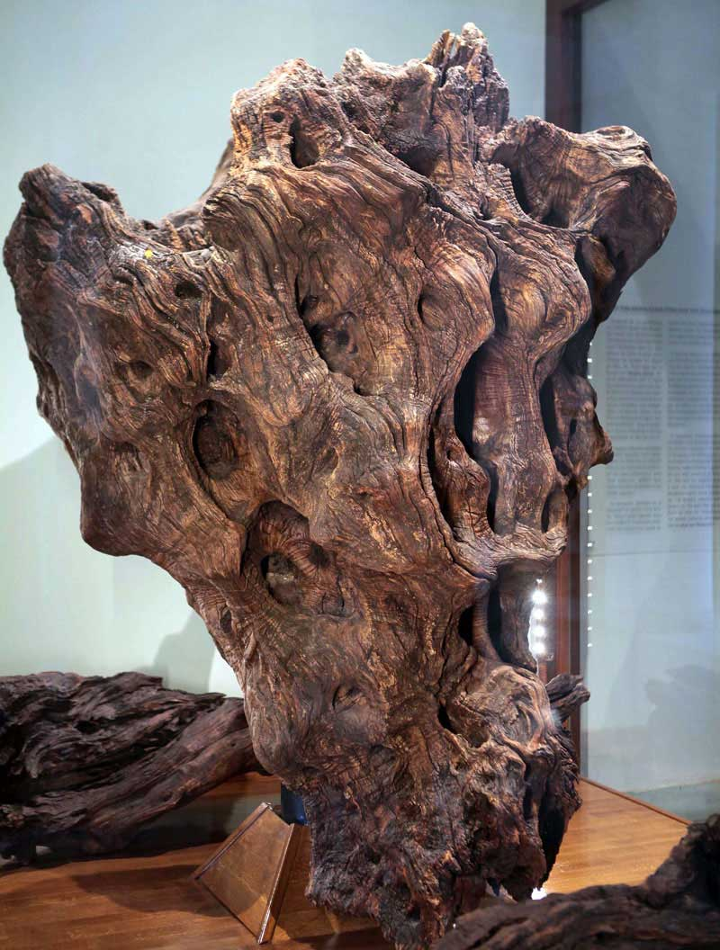 Part of the trunk of