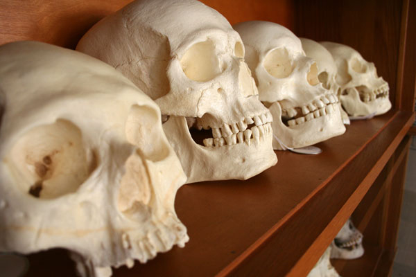 Skulls from forensic anthropology lab (Photo credit: David Hunt, North Carolina State University).
