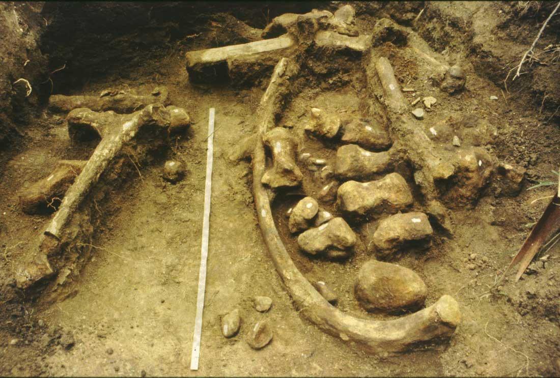 The Ambelia elephant, elements in situ.