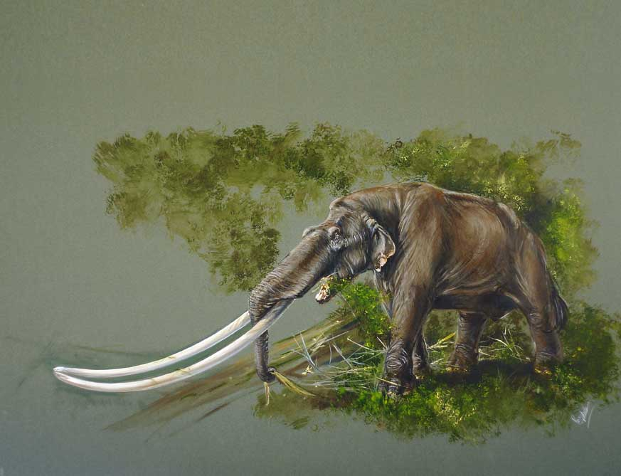Reconstruction of the Milia Mastodon (Remie Bakker and Dick Mol).
