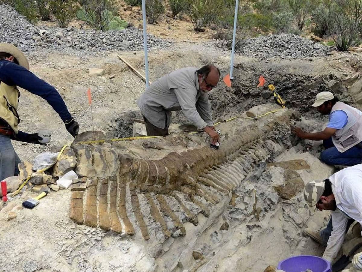 Dinosaur tail found at Coahuila, Mexico.
