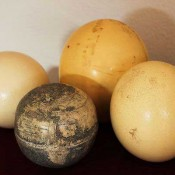 Globe carved on ostrich eggs