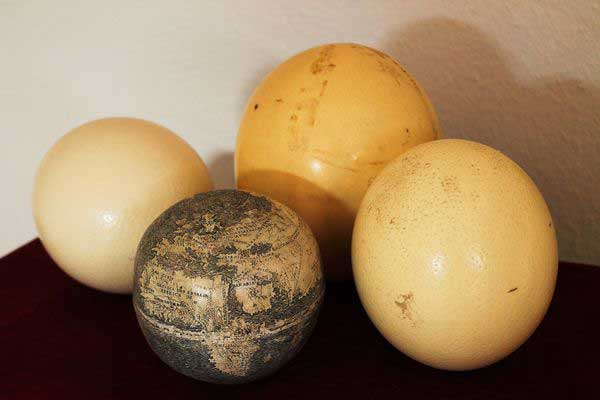 To date the globe, a radiologist compared its density with newer ostrich eggshells. Photograph courtesy: Washington Map Society