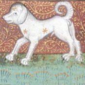 Pet Care Advice from the Middle Ages