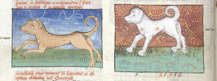 Miniatures of Canis Maior (Larger Dog) and Canis Minor (Smaller Dog), in tables from Ptolemy's Almagest. (Source: Medievelists.net).