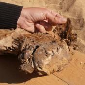 Egyptian Dog Mummy Infested with Bloodsucking Parasites