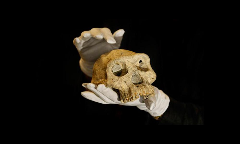 David Lordkipanidze, holds a pre-human skull found in 2005 in Dmanisi, Georgia. Photo: Shakh Aivazov.