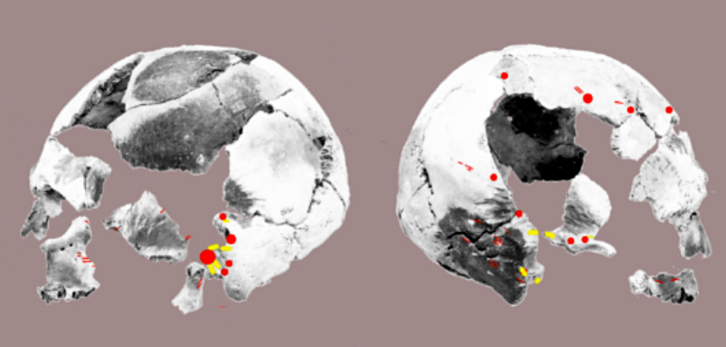 Digitally reconstructed skull in Context 758 [Credit: International Journal of Osteoarcheology].