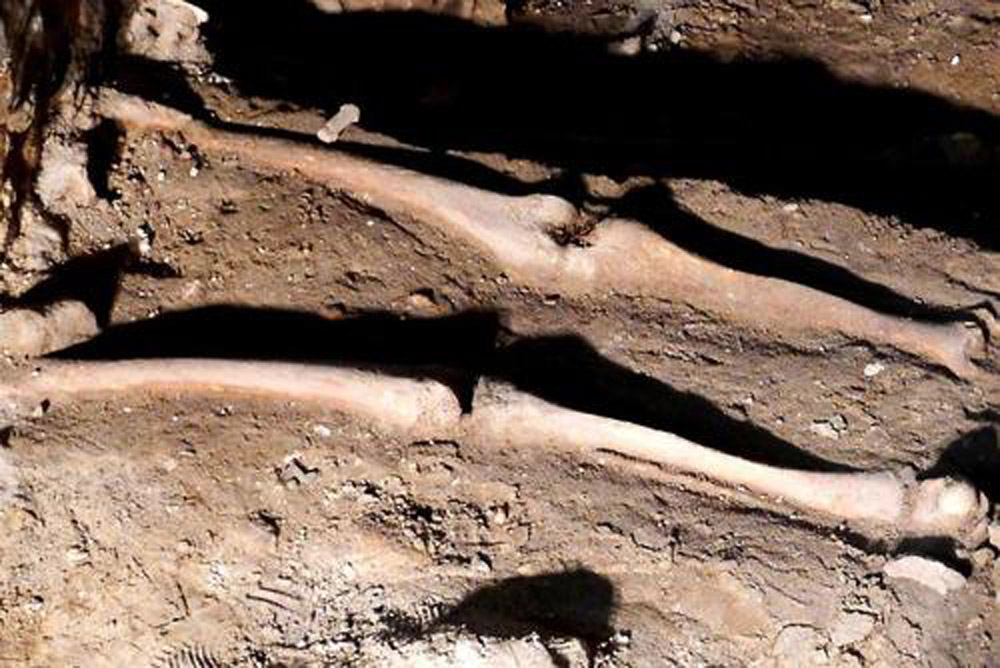 Human remains at Małachowianka school, Mazowieckie, Poland. Photo: PAP 2013/Marcin Bednarski.