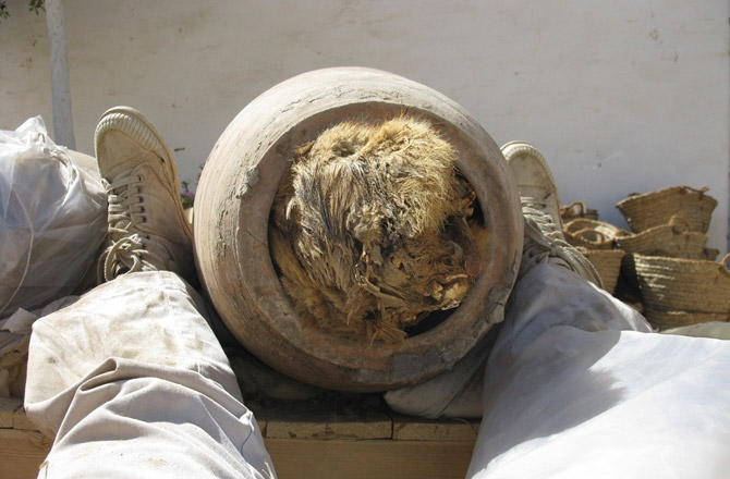 Pot burial of dog nicknamed Chewie, Abydos, Egypt. c. 1000 BC.