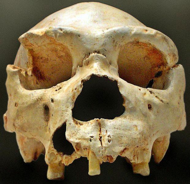 Homo heidelbergensis skull from Sima de los Huesos. Image: José-Manuel Benito Álvarez, Wikimedia Commons.