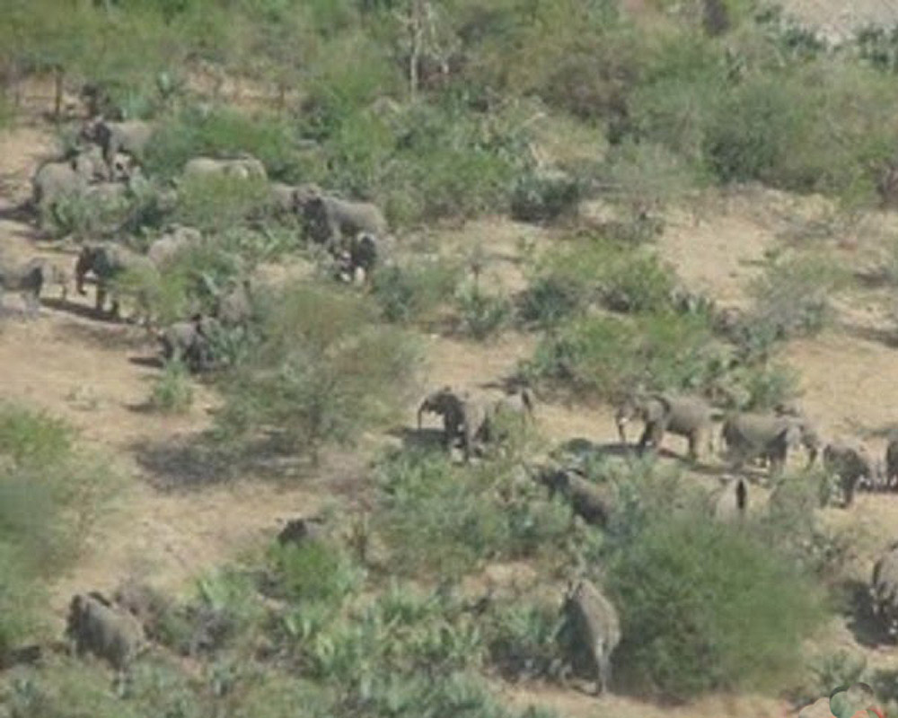 Eritrea elephants in their natural habitat. Source: Panoramio.