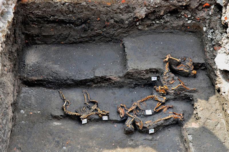 Group burial containing twelve dogs. Aztec, Late Postclassic period. Azcapotzalco Northwest Mexico City, Mexico.
