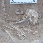 Cat Domestication in Egypt Pushed Back By 2,000 Years