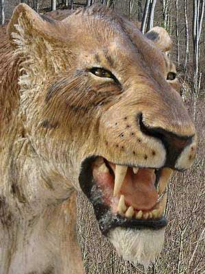 Reconstruction of the saber-toothed cat, with long canines used to hold on to prey. Image: Ramon López.
