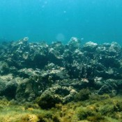 Haïti requests UNESCO to send experts to examine shipwreck off its coast