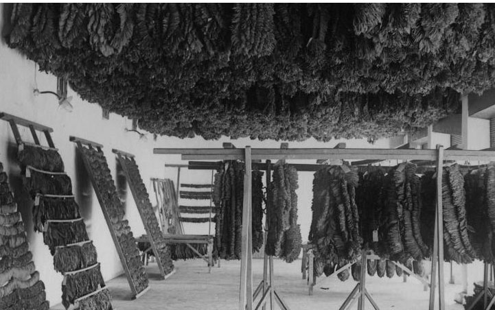 Greek tobacco has been and continues to be among the finest in the world. © Benaki Museum