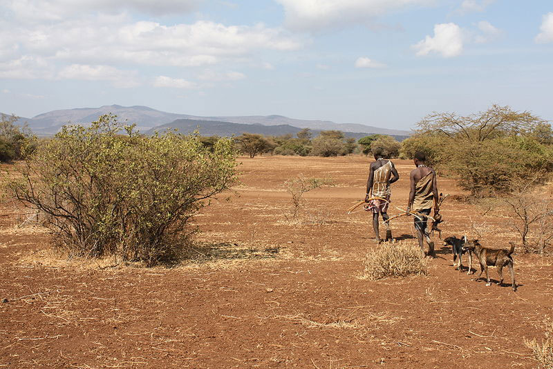 Two Hadzabe men in Tanzania walking, carrying bows and today's catch. Two dogs follow them. Wikimedia Commons. Andreas Lederer.