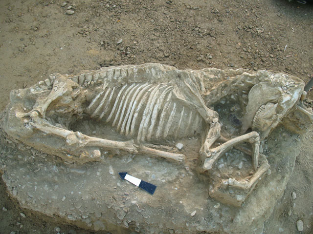 """The horse burial  that came to light on a plot at the """"Psomi"""" site of the Chios municipality."""