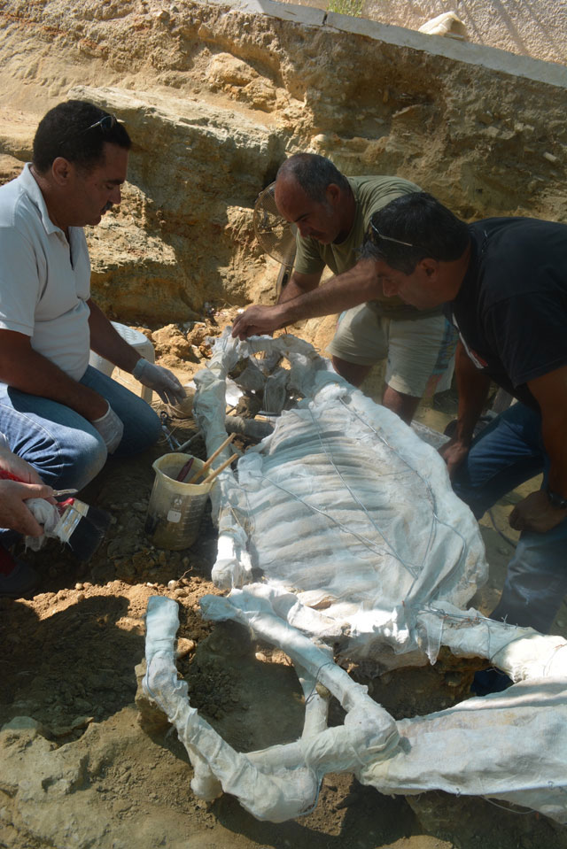 The horse, placed in a resting position, was taken to the conservation workshops of the Chios Archaeological Museum.