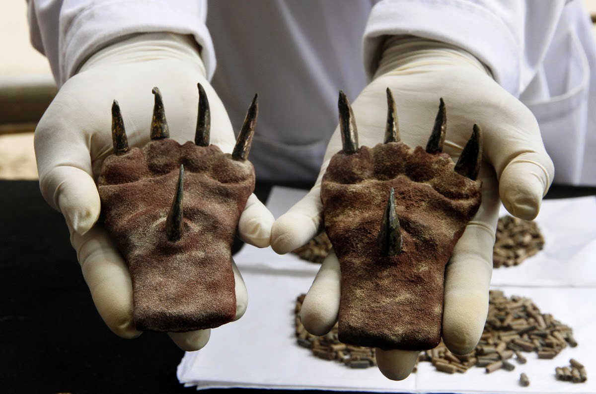 Huaca de la Luna archaeological site: A pair of metal claws found at the tomb from the Moche culture recently excavated [Credit: Reuters]