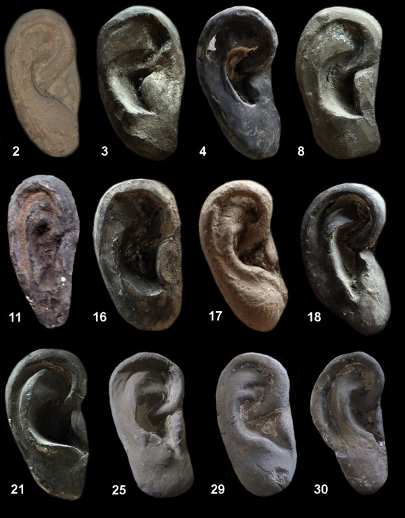 Fig. 2. China's Terracotta Army, 3D: Examples of twelve different ears (heights have been standardised). Photo: Journal of Archaeological Science 49 (2014).