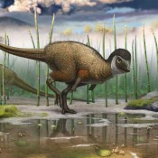 A Jurassic ornithischian dinosaur from Siberia with both feathers and scales