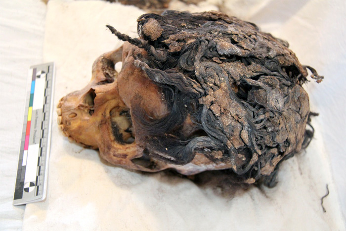 The remains of a 3,300-year-old woman who wore a complex hairstyle with 70 hair extensions was discovered in the ancient city of Armana. Credit: Photo by Jolanda Bos and Lonneke Beukenholdt.