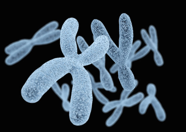 Insights from high-resolution Y chromosome and mtDNA sequences. Credit: razlomov, Shutterstock