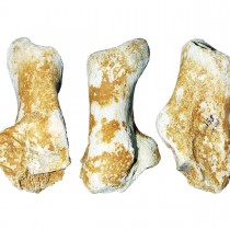 Fossil of giant 3-million-year-old bear found in Grevena, Greece