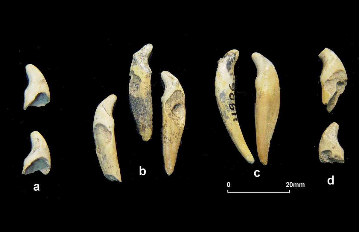 5,000 milk teeth were found at the Bear Cave of  Almopia Speleopark. (Photo credit: AMNA)