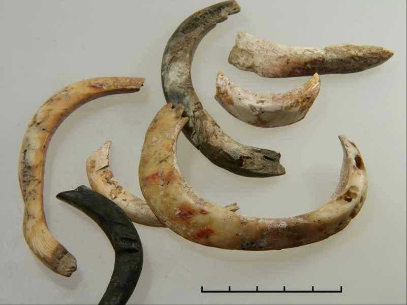 Fig. 7.  Neolithic ornaments made of thorny oyster shell (Spondylus gaederopus) (Photo: Fotis Ifantidis).