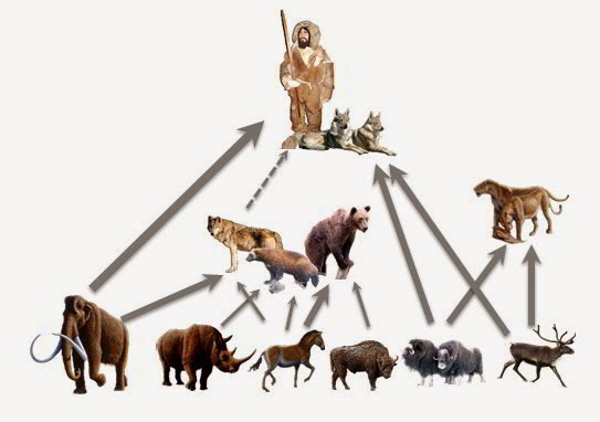 Simplified prey-predator relationships for prehistoric humans and large mammals in Předmostí I. Illustration: H. Bocherens with credits to: Wooly mammoth, wooly rhino, horse & cave lion: M. Antón, Muskox: US Fish and Wildlife Service; Reindeer: A. Buisse; Wolf: S. Atienza; Wolverine: M. Kabel; Brown bear: J.-N. Lafargue; Dogs: M. Peron; Bison: M. Gäbler; Prehistoric man: H. Bocherens.