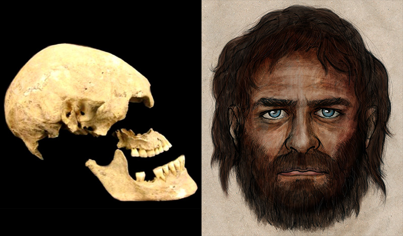 Left:The Stuttgart skull, from a 7,000-year-old skeleton found in Germany among artifacts from the first widespread farming culture of central Europe. Right: Blue eyes and dark skin, that's how the European hunter-gatherer appeared 7,000 years ago. Artist depiction based on La Braña 1, whose remains were recovered at La Braña-Arintero site in León, Spain. Courtesy of the Consejo Superior de Investigaciones Cientificas.