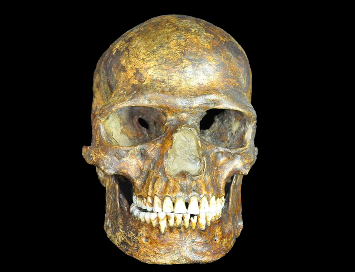 The fossilized skull of Kostenki XIV. Photo credit: Peter the Great Museum of Anthropology and Ethnography