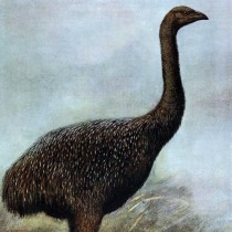 New Zealand's moa exterminated by an extremely low-density human population